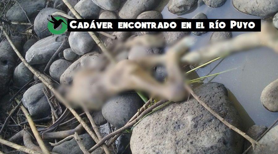 Cadáver encontrado en el río Puyo