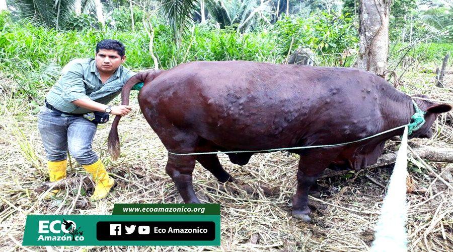 Brigada médica veterinaria en varias comunidades