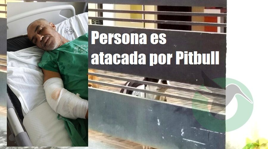 Se denuncia ataque de perros Pitbull enPuyo