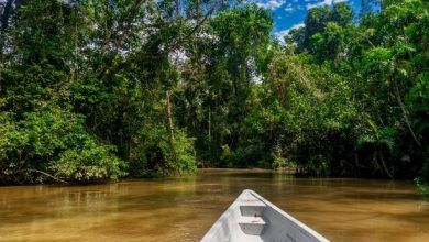 Amazonia: Una región productiva