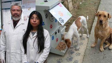 Estudiante mexicana crea croquetas anticonceptivas para perritos callejeros