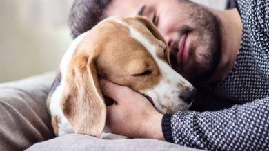 Hombre murió por una infección adquirida por lamida de perro