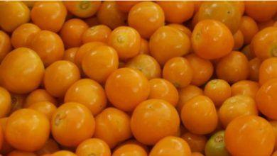 Ecuador realiza su primer envío de uvillas a EE.UU.