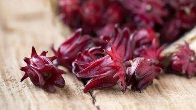 Flor de jamaica mata más bacterias que el cloro
