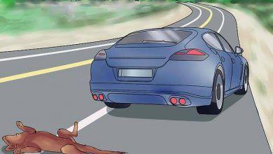 Denuncia de ciudadana ya que vehículos atropellan a sus mascotas