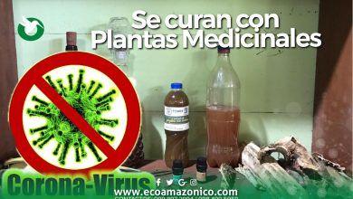 Se curan del COVID-19 con Plantas Medicinales en Pastaza