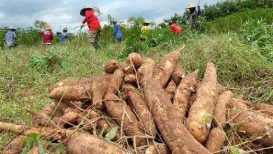 Proyecto CHAKRA ARAJUNO ganó concurso de reactivación económica Post Covid.
