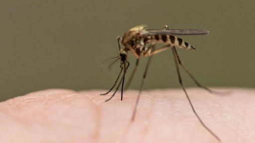 Se confirma brote de Paludismo en Pastaza