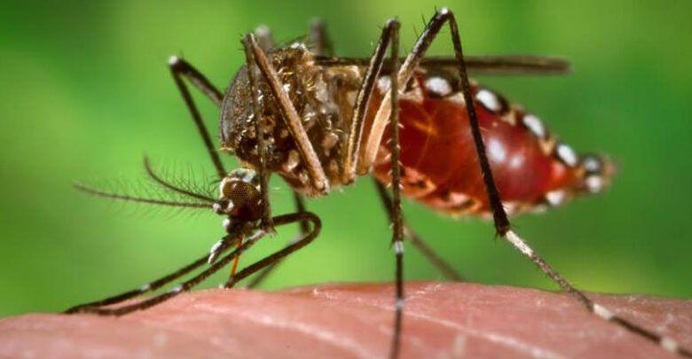 Medidas preventivas para disminuir la transmisión de enfermedades por mosquitos