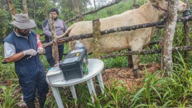 Prefectura de Pastaza impulsa el mejoramiento genético ganadero