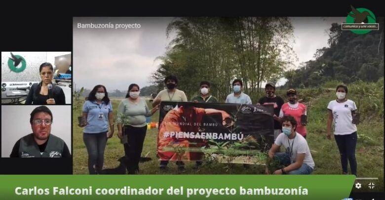 Carlos Falconi coordinador del proyecto Bambuzonía