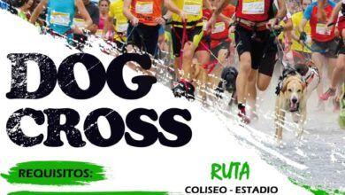 Dog Cross Palora 2021